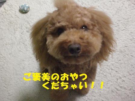 CIMG7412.jpg