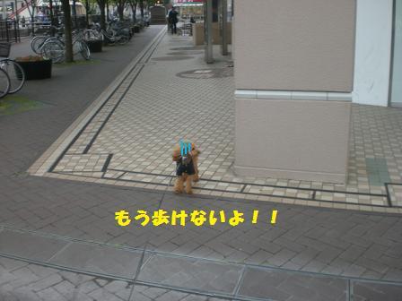 CIMG7502.jpg
