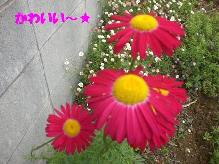 CIMG7782.jpg