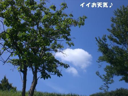 CIMG8304.jpg