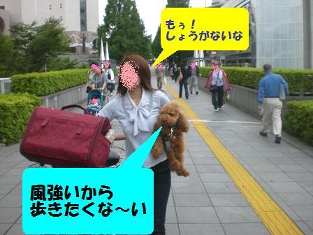 CIMG8440.jpg