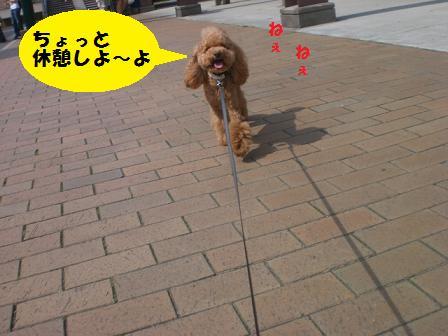 CIMG8633.jpg