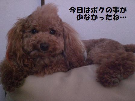 CIMG8774.jpg
