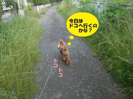 CIMG8781.jpg