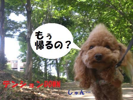 CIMG9059.jpg