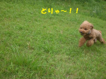 CIMG9295.jpg