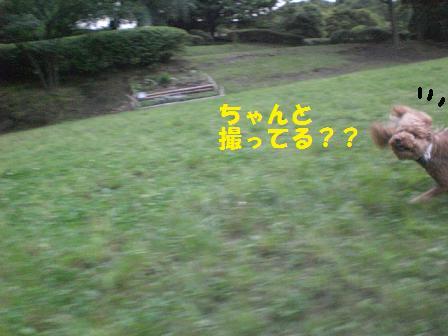 CIMG9364.jpg