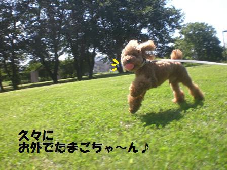 CIMG9387.jpg