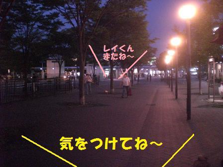 CIMG9531.jpg