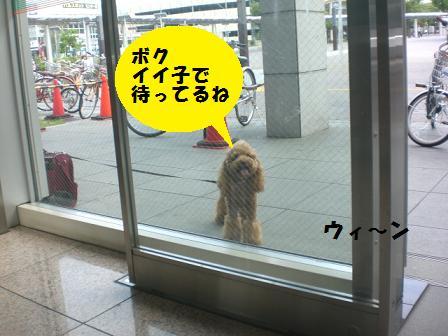 CIMG9691.jpg