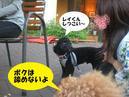 CIMG9696.jpg
