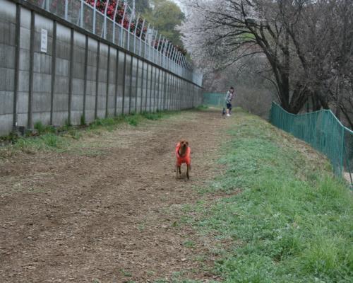 走るレッド