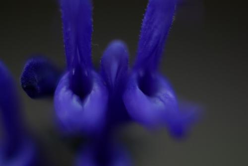 紫 花 2