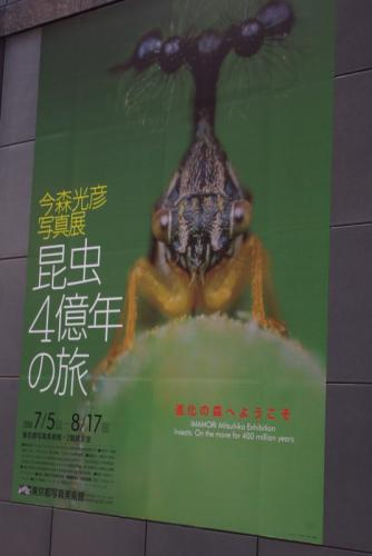 今森光彦 写真展 昆虫4億年の旅