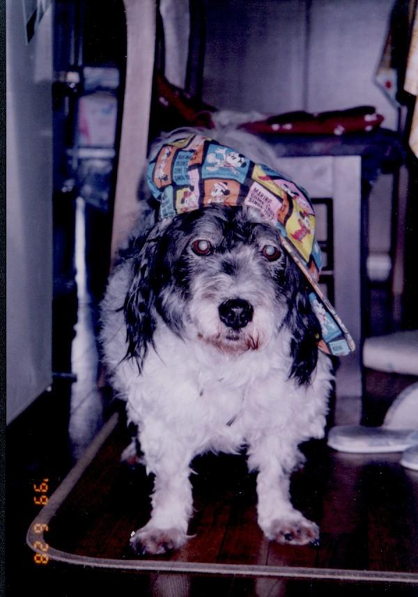 帽子をかぶるジャンボ!お似合いでしょ。