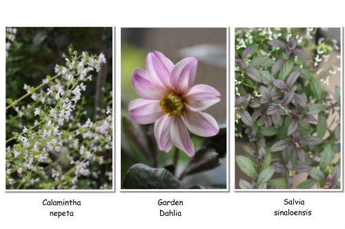 flower1a_Page_0.jpg