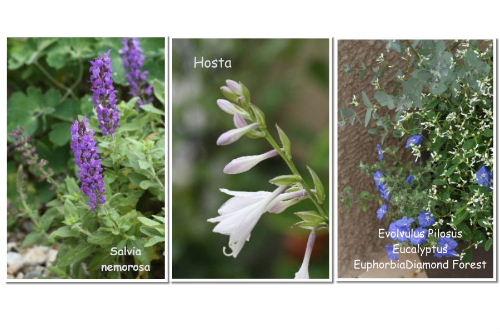 flower3a_Page_0.jpg
