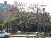 200803台湾 196