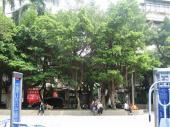 200803台湾 037