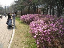200804韓国 028