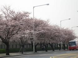 200804韓国 041