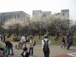200804韓国 050