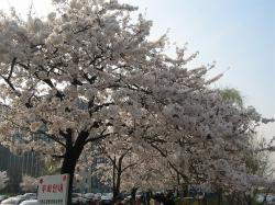 200804韓国 104