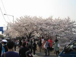 200804韓国 117