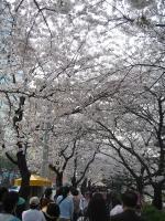 200804韓国 115