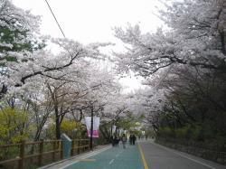200804韓国 162