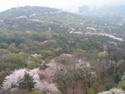 200804韓国 179