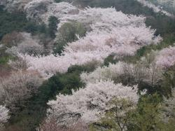 200804韓国 180