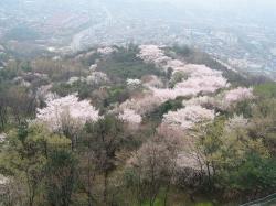 200804韓国 182