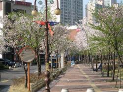 200804韓国 144