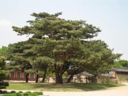 200805韓国 021