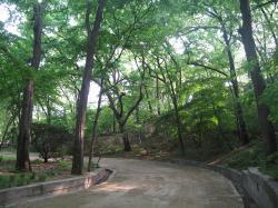 200805韓国 116