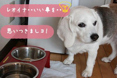 10_20080616111038.jpg