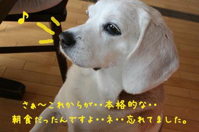 11_20080616111048.jpg