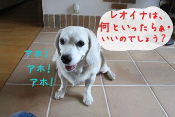 11_20080714123332.jpg