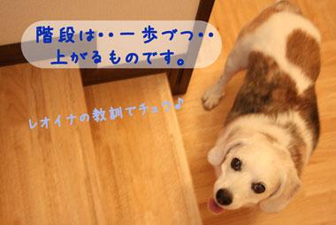11_20080728200457.jpg