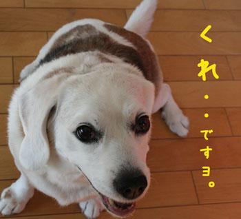 12_20080616111058.jpg