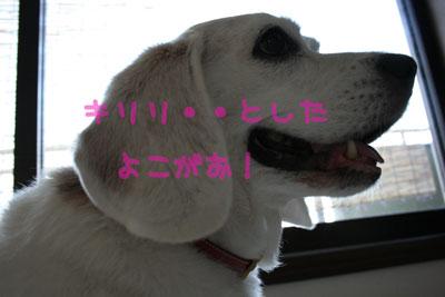 12_20080722112824.jpg