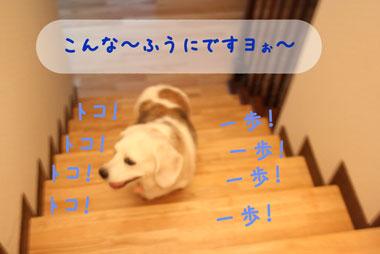 12_20080728200512.jpg