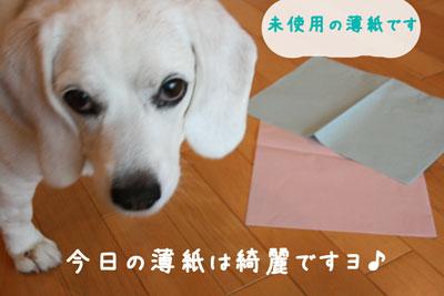 13_20080629211652.jpg