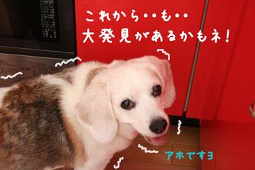 14_20080714123404.jpg