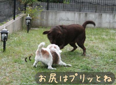 15_20080618185059.jpg