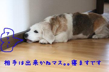 15_20080714123422.jpg
