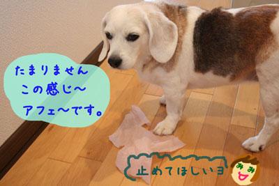 16_20080629211720.jpg