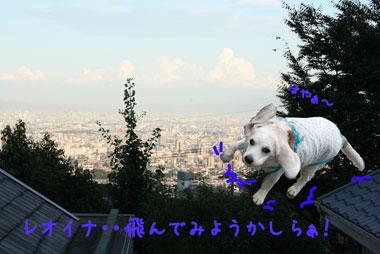 17_20080728200626.jpg