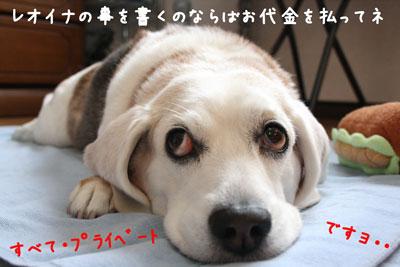 1_20080530163739.jpg